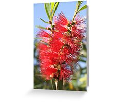 Red bottle brush Greeting Card