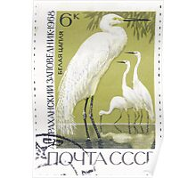 Fauna series The Soviet Union 1968 CPA 3675 stamp Great White Egrets Astrakhan Nature Reserve cancelled light USSR Poster