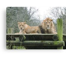 Mr & Mrs (Lion) Canvas Print