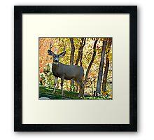 Safe from the hunt. © Framed Print