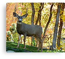 Safe from the hunt. © Canvas Print