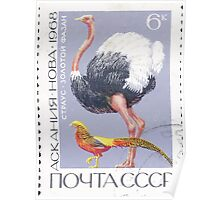 Fauna series The Soviet Union 1968 CPA 3678 stamp Ostrich and Golden Pheasant Askania Nova cancelled light USSR Poster