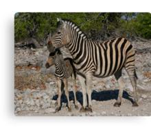 Zebra and Colt Canvas Print