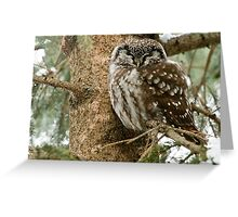 Boreal Owl Greeting Card