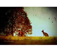 All in the moonlight pale ... Photographic Print