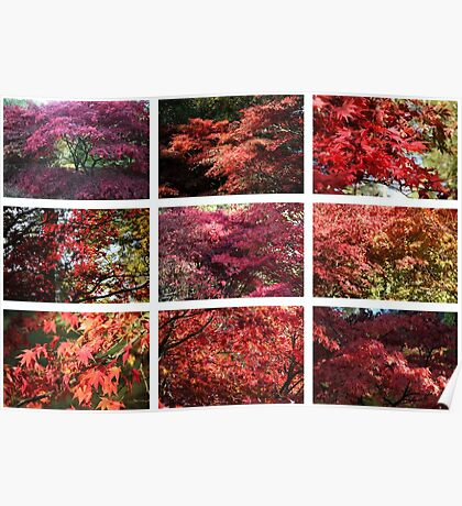 Westonbirt colours Red Poster