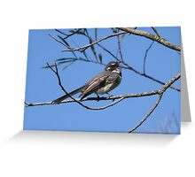 Grey Fantail Singing Greeting Card