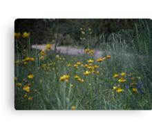 Roadside Wildflowers Canvas Print