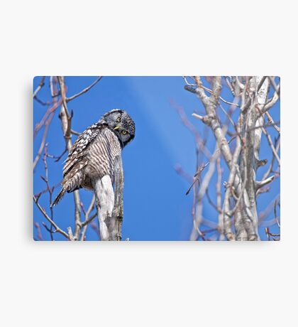Nope you don't look any better this way Metal Print