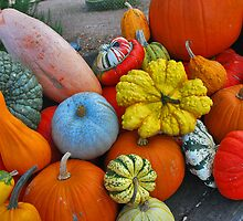 Pumpkins in all shapes and colors..... by Adri  Padmos