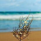 Starfish Tree by Anita Waters