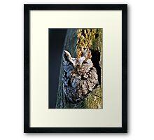 Screech Owl - Ottawa, Ontario Framed Print
