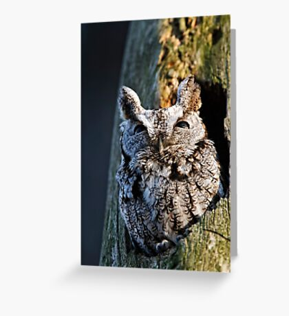 Screech Owl - Ottawa, Ontario Greeting Card
