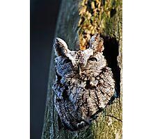 Screech Owl - Ottawa, Ontario Photographic Print