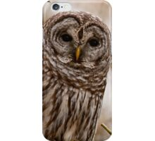 Barred Owl - Presqu'ile Provincial Park  iPhone Case/Skin