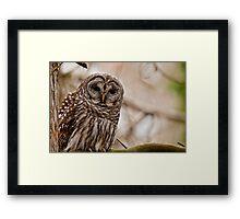 Barred Owl - Presqu'ile Provincial Park  Framed Print