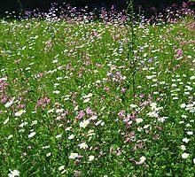Wild Flowers by Nic Lahey