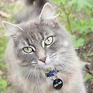 One pretty kitty. by Chrissy Rosadoni