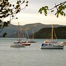 Akaroa Harbour, New Zealand by Ali Brown