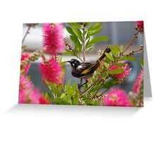 getting a little sweet nectar from the bottlebrush Greeting Card