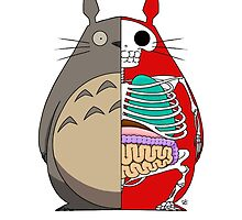 Totoro Dissected by crabro