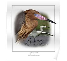 REDDISH EGRET  Egretta rufescens #2 (NOT A PHOTOGRAPH OR PHOTOMANIPULATION) Poster