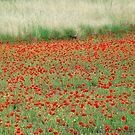 Seasonal Fields of Italy by Deborah Downes