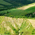 Hilltop Winter Wheat-Civitella d Agiliano, Italy by Deborah Downes