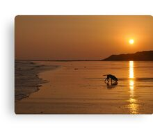 Sunset at Shellinghill, Co Louth Canvas Print