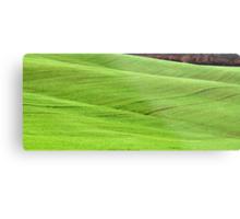 Tuscan Waves of Winter Wheat-near Siena Metal Print