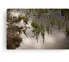 Samphire at Salthouse, Norfolk. Canvas Print