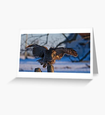 Great Gray Owl on Post - Dunrobin Ontario Greeting Card