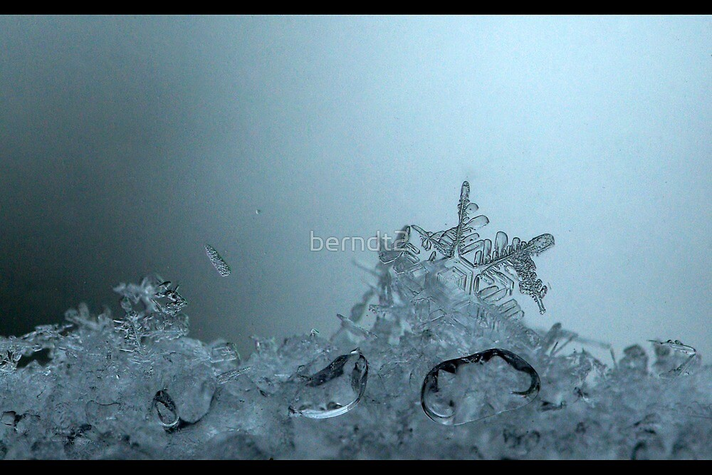 On Ice by berndt2