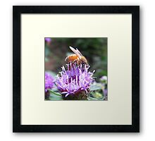 Playing In The Pollen Framed Print