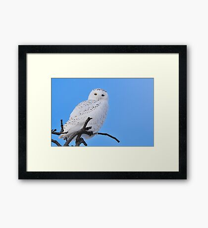 Snowy Owl in Tree Framed Print