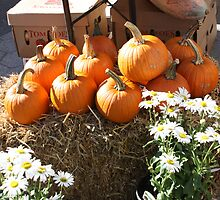 Pumpkin season sellout by Bridie Walsh