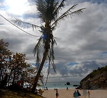 Palm tree on the beach by RegMan56