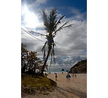 Palm tree on the beach Photographic Print