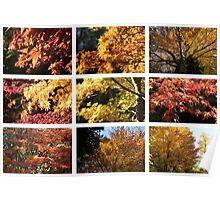 Westonbirt colours Yellow Poster