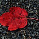 Crimson by Jamie Lee