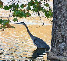 Blue Heron at Memorial Park by mltrue