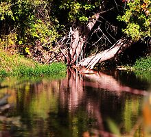Where's The Mirror?...Boise River Walkabout by trueblvr