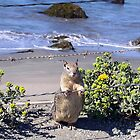 Squirrel on the way to Monterey by Renee D. Miranda