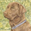 Holly - The Chocolate Labrador by FranEvans