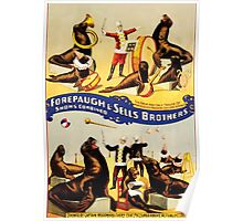 Poster 1890s Marvelously trained sea lions & seals poster for Forepaugh & Sells Brothers 1899 Poster