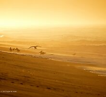 Atlantic Ocean Beach - Seagull's Coming Home | Fire Island, New York  by © Sophie W. Smith
