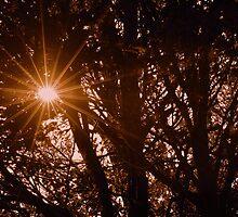 Autumn Sun Through Tree's by Stan Owen