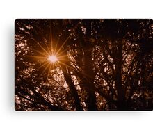 Autumn Sun Through Tree's Canvas Print