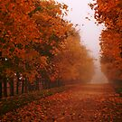 Misty Autumn morning, Gloucestershire, UK by buttonpresser