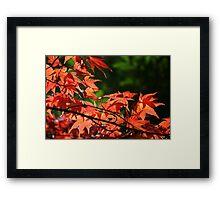 Westonbirt Red Framed Print